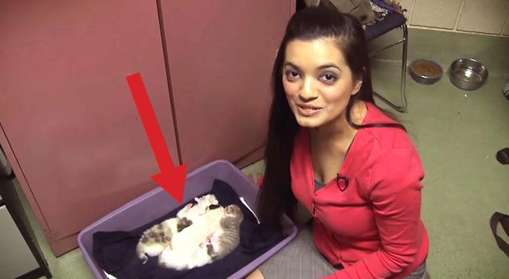 Ze zetten een hond in een nest van katten. De reactie van de moeder? Wow.