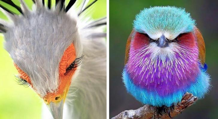 15 photos d'oiseaux si fascinants et si particuliers qu'ils semblent venir d'une autre planète