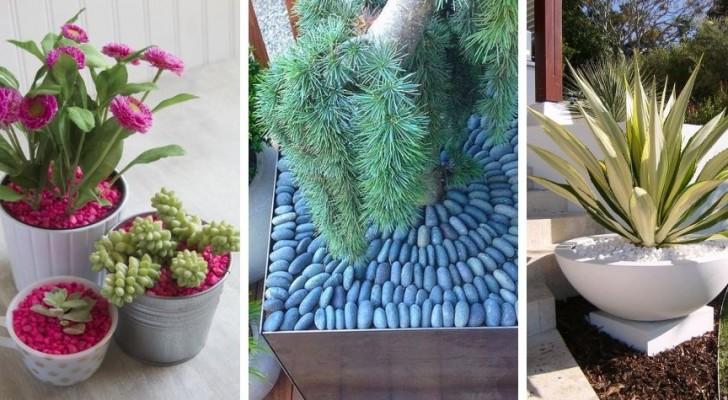 Piante e design: dona ai tuoi vasi un tocco creativo e sofisticato usando le pietre colorate