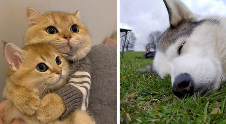 Wat zijn ze schattig!: 16 huisdieren die mensen hebben veroverd met hun tederheid
