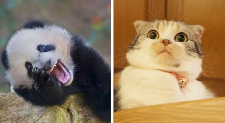Verrückte Tiere: 16 Arten, die so tollpatschig und urkomisch sind, dass sie den Sympathiepreis gewinnen sollten