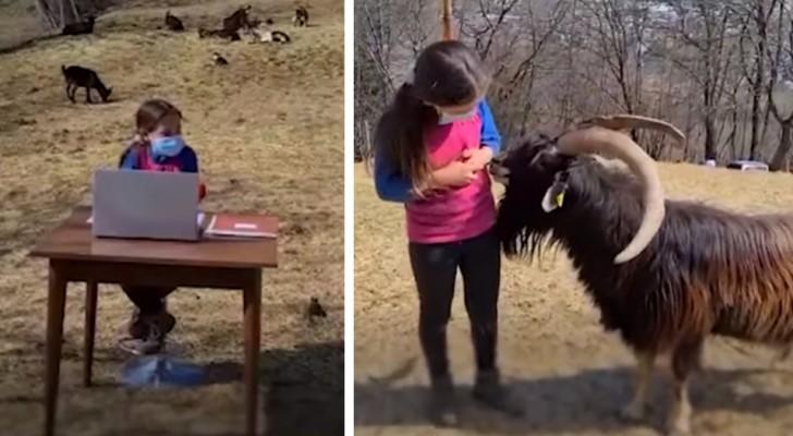 Didattica a distanza tra le caprette: a Trento, bimba di 10 anni studia all'aperto e aiuta il papà con gli animali