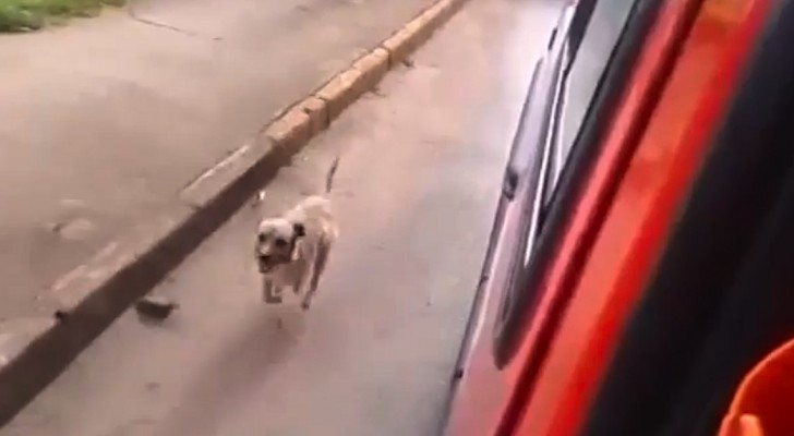 His owner is taken away in an ambulance: THIS is the dog's reaction...