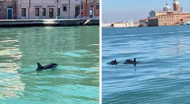 Venezia, due delfini si spingono fino al Canal Grande: il rarissimo avvistamento stupisce tutti