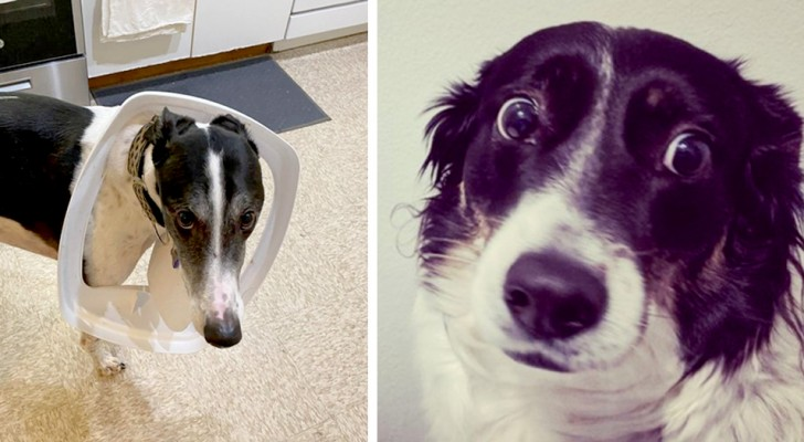 Sorry, I won't do it again ...: 16 dogs caught red-handed, who couldn't help but look guilty