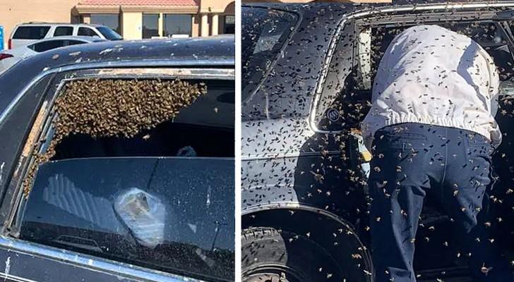 Pompiere fuori servizio salva un automobilista che si è ritrovato 15.000 api dentro la macchina