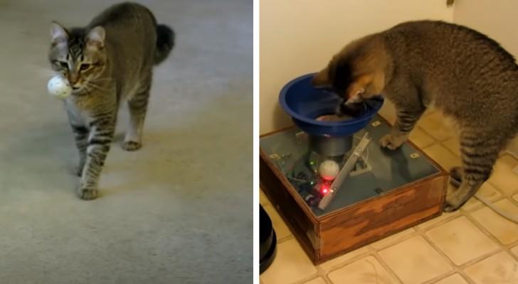 Costruisce una macchina per permettere al suo gatto di andare a caccia del cibo