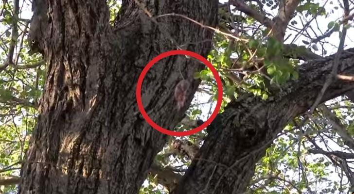 Sie finden ein kleines Tierchen, das an einem Baum hängt. So retten sie ihm das Leben