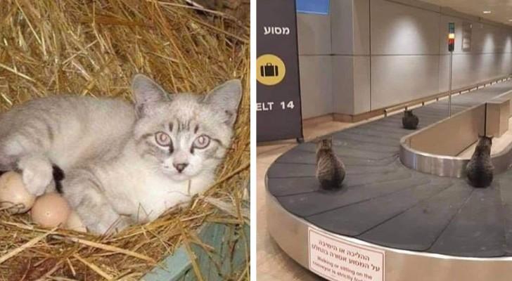 16 hilarische foto's van katten die hebben besloten om te ontspannen op alternatieve plaatsen