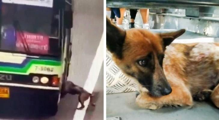 En busschaufför gör ett extra stopp på vägen för att rädda en borttappad hund från gatan
