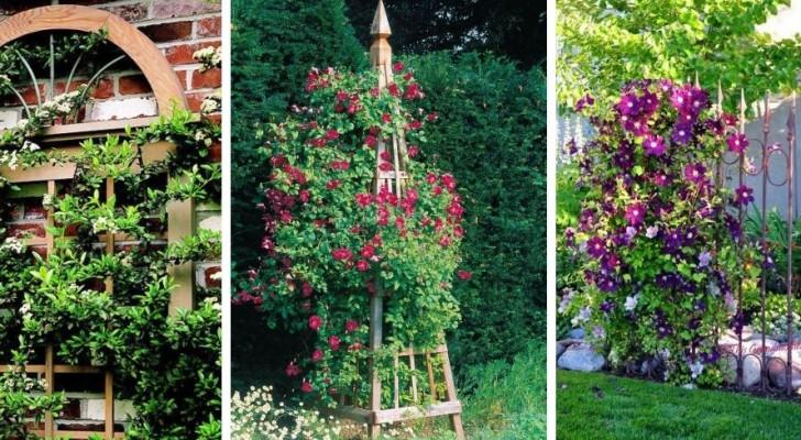Tralicci fai-da-te per piante rampicanti: decora il giardino con queste splendide idee verdi