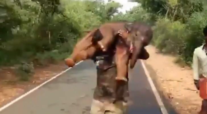 Un garde forestier porte un éléphanteau sur son dos : le sauvetage héroïque