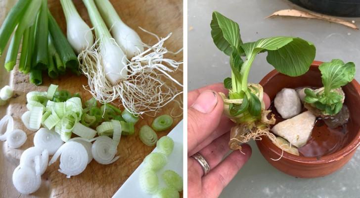 7 vegetali che puoi coltivare in casa a partire dagli scarti di cucina