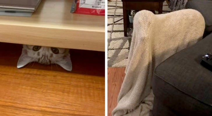 So that's where you got to!: 16 pets with an innate talent for sneaking around everywhere