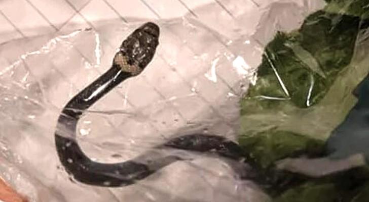 Una donna trova un serpente dentro alla confezione di insalata comprata al supermercato