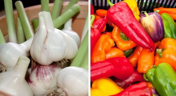 Découvrez quelles plantes ne doivent pas pousser ensemble si vous voulez obtenir de meilleurs résultats dans votre potager