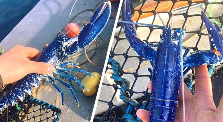 Un pêcheur trouve un rare homard bleu et décide de le remettre à la mer : Je ne l'aurais jamais mangé