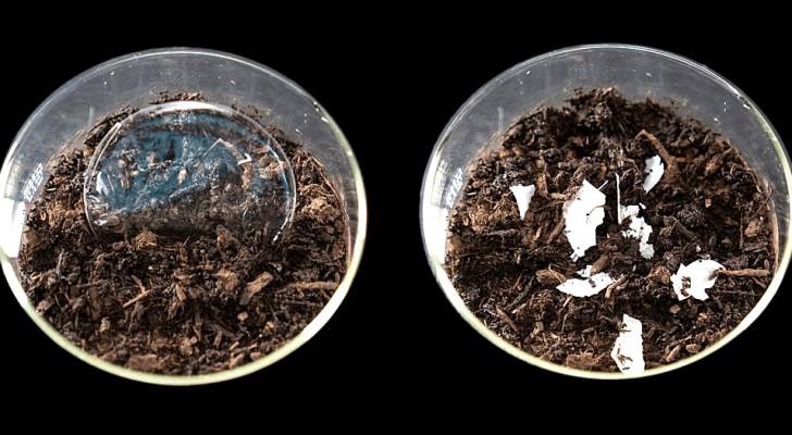 Un team di ricerca realizza una plastica veramente biodegradabile: si dissolve senza lasciare tracce