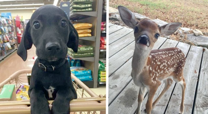 Too cute to be true: 16 animals so sweet they look like they came out of a cartoon