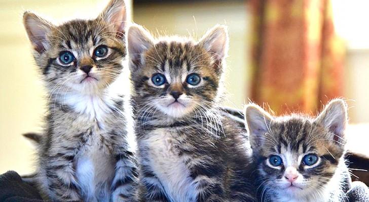J'ai dû piquer à l'instant 4 chatons, stérilisez vos animaux de compagnie : le message sans appel d'un vétérinaire