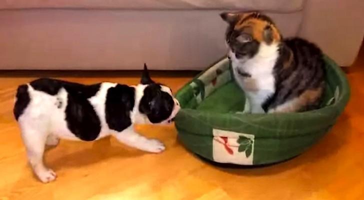De kat steelt het bedje van het hondje: zijn reactie is hilarisch!