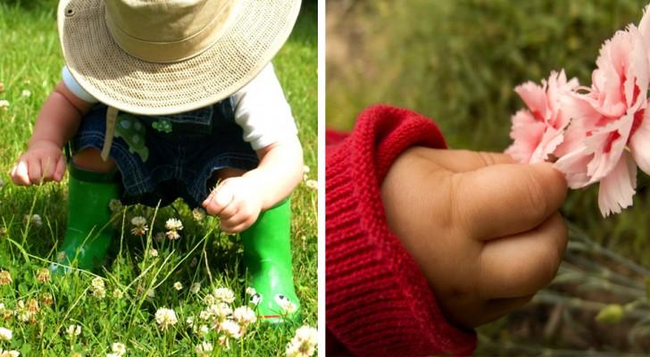 """Ein sechsjähriger Junge wird für ein """"schreckliches"""" Vergehen vor Gericht gestellt: Er hat eine Blume von einer Wiese gepflückt"""