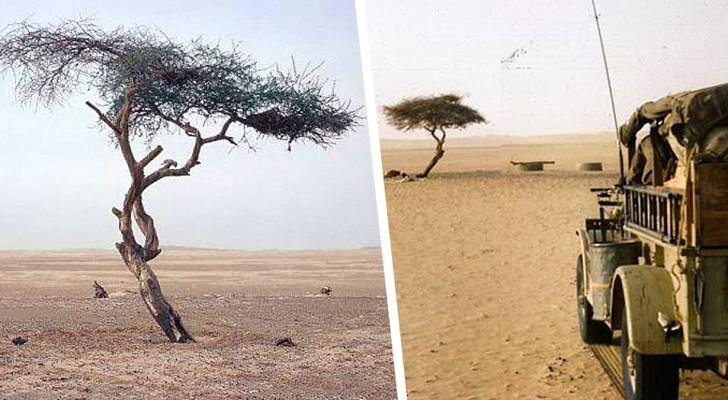 Ténéré: l'albero più isolato del mondo abbattuto da un camionista ubriaco