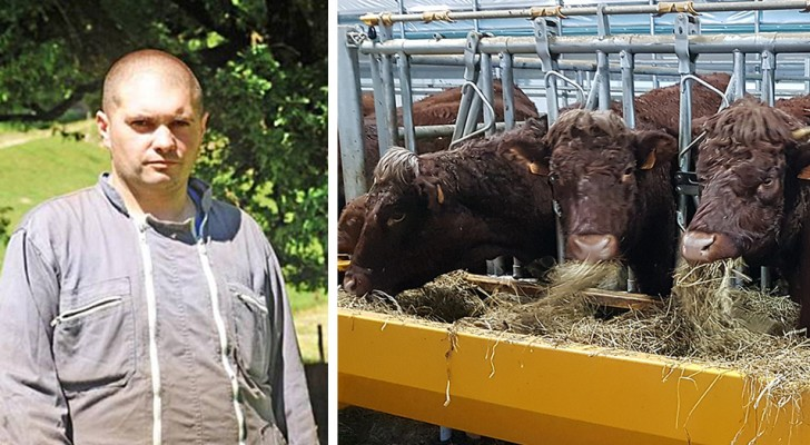 Allevatore da 6 generazioni costretto a traslocare: le sue mucche disturbano i vicini arrivati dalla città
