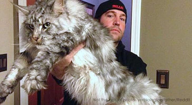 Sie entführen eine Katze, geben sie dann aber ihrem Besitzer zurück: Sie hat zu viel gefressen