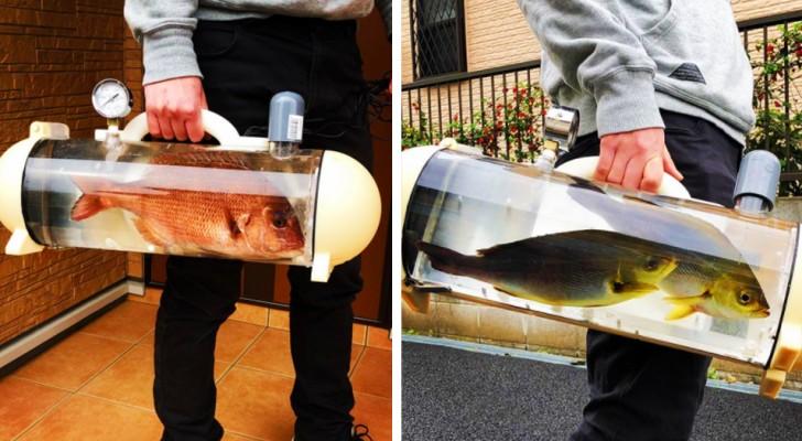 Un'azienda sviluppa la borsa bauletto per portare i pesciolini a passeggio