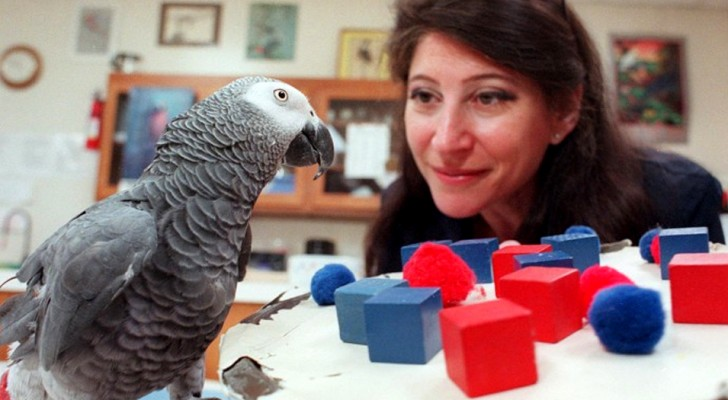 Alex, the parrot who had the intelligence of a 5 year old and who could really hold a conversation