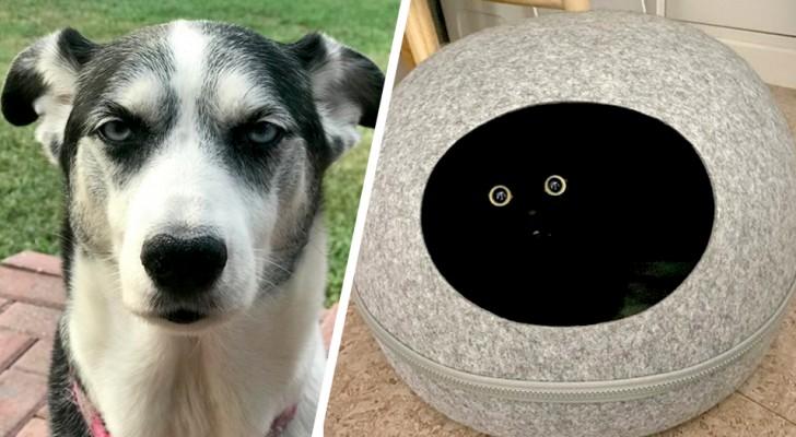 Impossible resistere: 16 animali domestici capaci di strapparci un sorriso anche nella giornata peggiore