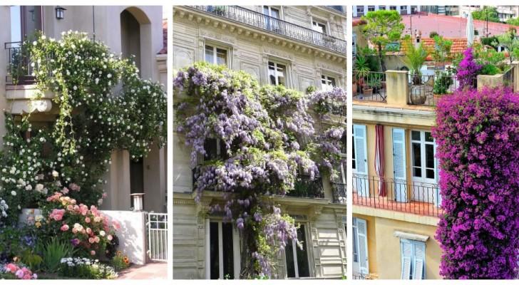 Balcons fleuris mais sans pots : laissez-vous inspirer par ces splendides projets