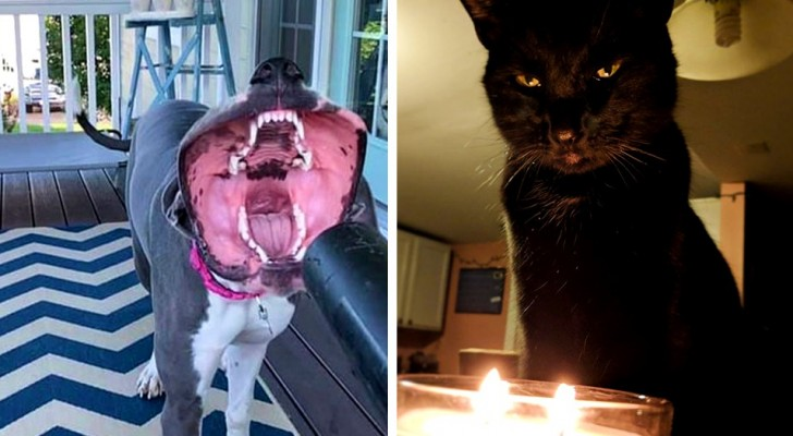 15 keer waarin eigenaren doodsbang waren voor het uiterlijk van hun huisdier