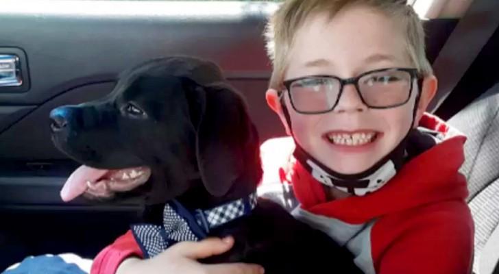 Kleiner Junge verkauft seine Pokémon-Karten, um seinem Hund das Leben zu retten: Er liebt ihn zu sehr