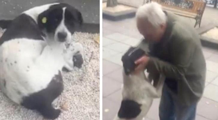 Anziano ritrova il suo cagnolino dopo averlo perso tre anni prima: la storia che ha commosso tutti
