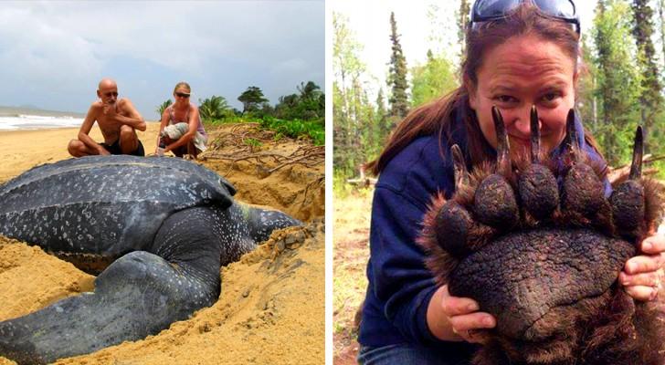 Unerwartet groß: 15 unglaubliche Fotos zeigen uns Tiere in ihrer wahren Größe
