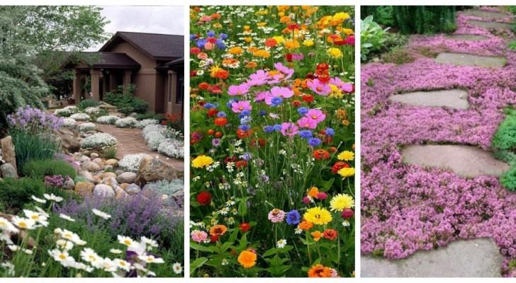 Non solo prato: scopri le alternative più belle per giardini straordinari