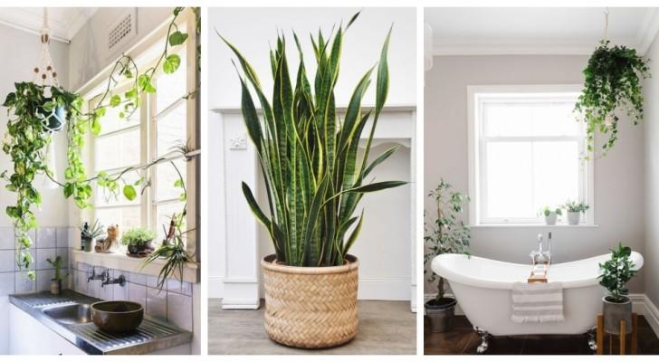 Una pianta per ogni stanza: i consigli migliori per scegliere quelle giuste