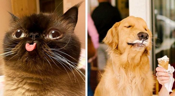 Deze Facebook-pagina deelt foto's van dieren die het verdienen om gezien te worden