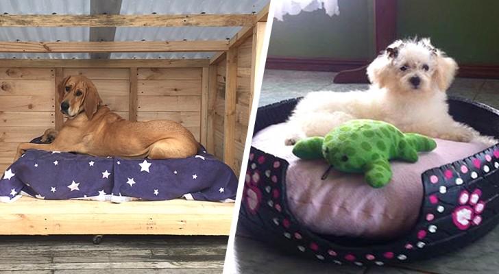 10 idee originali per creare una cuccia per cani o gatti utilizzando materiali di riciclo