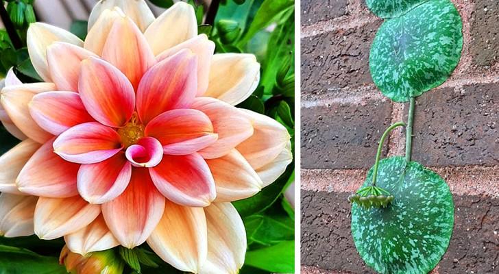 Botanische Wunder: 17 ungewöhnliche Pflanzen, die Menschen beschlossen, zu verewigen