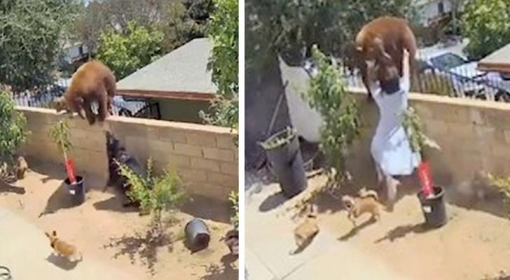 Joven empuja a un oso del paredón de su casa para salvar la vida de sus perros: un acto de gran heroísmo