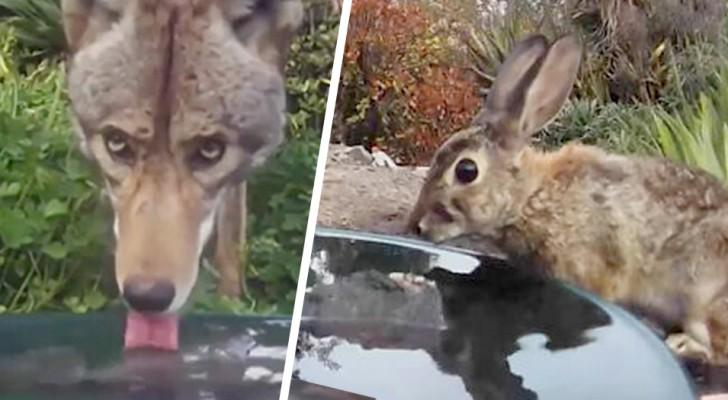 Sie stellt eine Kamera in der Nähe einer Wasserschüssel auf und verewigt alle Tiere, die dort angehalten haben