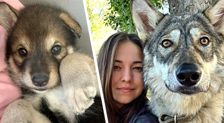 She adopts a wolf cub who had been abandoned by its mother: now they are inseparable