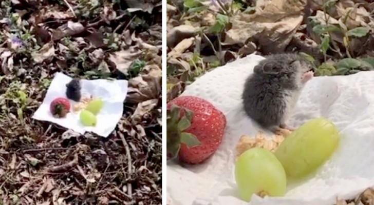 Ze ziet een hongerige muis in huis en organiseert een kleine picknick in de open lucht: een heel lief moment