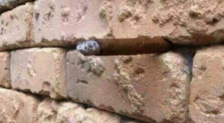 È un semplice muro di mattoni oppure nasconde qualcosa? Mettetevi alla prova con questa immagine