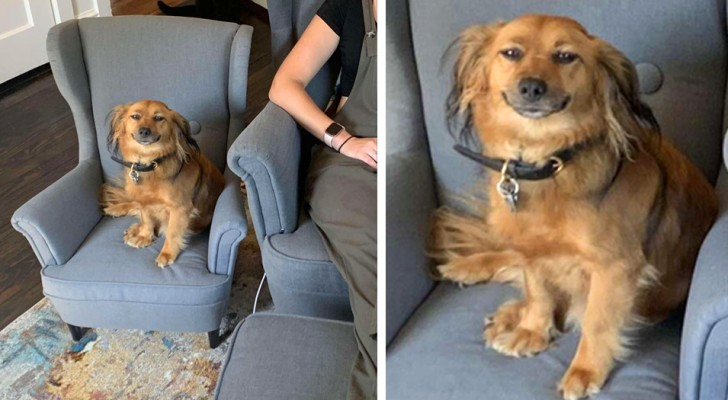 Il cane non riesce a smettere di sorridere dopo aver ricevuto in regalo una poltrona uguale a quella della sua padrona