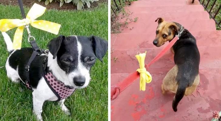 Se vedete un cane con un fiocco giallo, avvicinatevi con cautela: vuol dire che ha bisogno del suo spazio