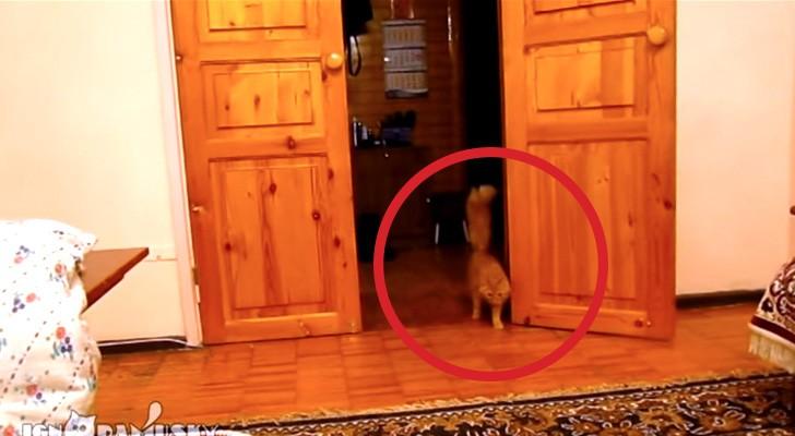 Il suo gatto si avvicina molto sospettoso: appena preme un tasto capirete il perché!